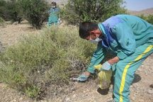 ۲۵۰۰ هکتار از نقاط آلوده به سالک در اردستان لانهکوبی شد