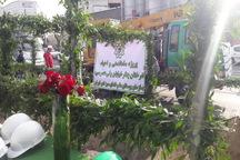 احیای چنارهای خیابان ولیعصر(عج) با کاشت 40 درخت آغاز شد