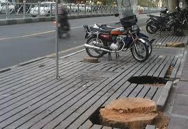 رئیس کمیسیون محیط زیست شورای شهر: در خصوص قطع ۲۷۰ اصله درخت در پایتخت معترض و پیگیریم
