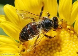 پدیده ریزگردها با منشا شیمیایی، تولید عسل را با خطر مواجه کرد
