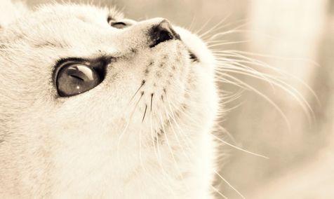 گربه باهوش فراری از قفس! + فیلم