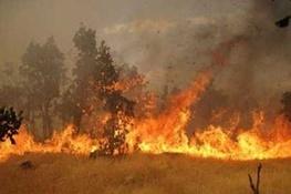 آتشسوزی در تالاب بینالمللی میانکاله  آیا باز هم دستهای پنهانی در کار است؟
