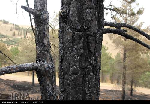 آتش سوزی جنگل های سنندج+ تصاویر