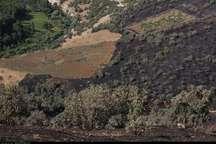 منابع طبیعی کردستان در خصوص خطر آتش سوزی مراتع هشدار داد