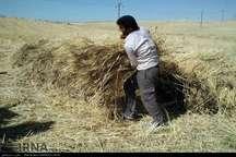 مدیرجهاد کشاورزی:15هزارتن گندم و جو در شهرستان دنا برداشت می شود