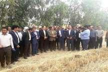 استاندار ایلام:کشاورزی دهلران با بهره برداری از طرح سامانه گرمسیری متحول می شود