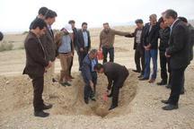 300 هزار اصله نهال در اراضی بیابانی دهلران غرس شد