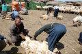 طرح از پشم تا فرش در دره شهر اجرایی می شود