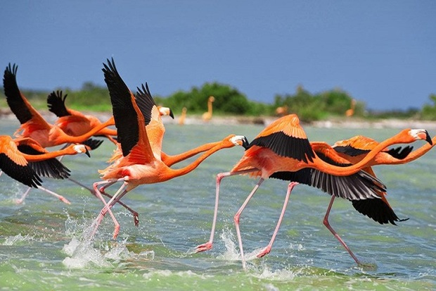 290 گونه پرنده در آذربایجان غربی زیست می کنند