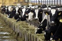 تامین نهاده برای کشاورزان با سامانه بازارگاه ساماندهی میشود