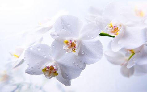 چگونه از گلهای ارکیده نگهداری کنیم؟