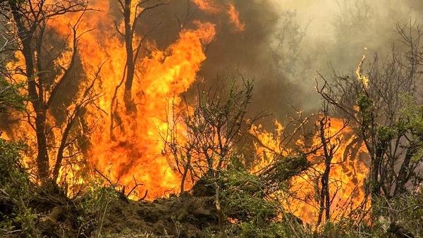 نابودی 40 هکتار از جنگل های مینودشت بر اثر آتشسوزی  مصدومیت 2 مامور منابع طبیعی