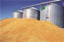 40 هزار تن گندم در سبزوار ذخیره شد