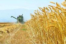 ایجاد مزرعه هایتک به صورت الگویی در آذربایجان شرقی