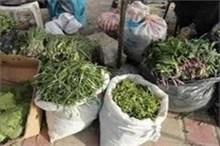مطبخ ایلامی ها معطر به عطر گیاهان بهاری