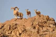 رد پای خشکسالی، همچنان در پارک ملی سیاهکوه یزد باقی است