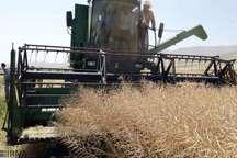 58 درصد مزارع کلزا در مینودشت برداشت شد
