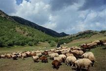 عشایر سالانه 160 هزار تن گوشت قرمز تولید می کنند