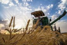 250 هزار تن گندم در بیله سوار مغان برداشت می شود