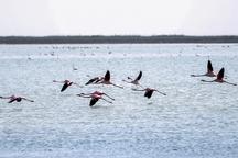 گرما کوچ پرندگان زمستان گذران را به میانکاله به تاخیر انداخت