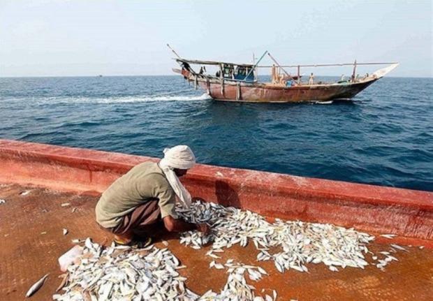 کاهش ذخایر دریایی مشکل جامعه صیادی استان بوشهر است