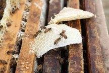 چالدران یکی از قطب های تولید عسل در آذربایجان غربی است