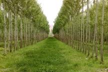 تولید نهال صنوبر به عنوان منبع تولید چوب در زنجان در دستور کار منابع طبیعی قرار گرفت