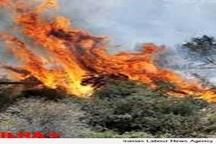 آتشسوزی 50 هکتار از اراضی بوئین زهرا
