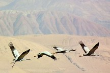 فرود پرندگان مهاجر در تایباد