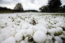 سرما 1485 میلیارد تومان به کشاورزی آذربایجان شرقی خسارت زد