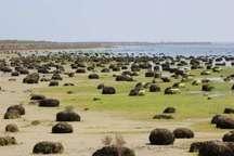 جلوگیری ازپیشروی خشکی در تالاب بین المللی میانکاله با اجرای طرح احیا