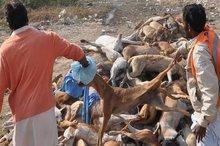اعتراض حامیان حقوق حیوانات به کشتار 50 قلاده سگ در اهواز