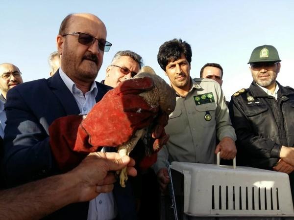 رهاسازی 5 پرنده در دشت اللهآباد آبیک