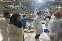 تجهیزات برخی از کشتارگاههای طیور در اصفهان نیازمند بازسازی است