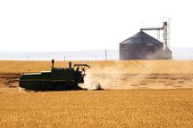 71 مرکز خرید تضمینی گندم در کردستان دایر شد