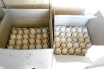 کشف پنج تن تخم مرغ غیر بهداشتی در مشهد