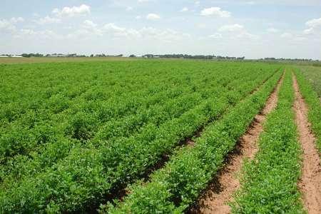 اجرای طرح حفاظتی در 2 هزار و 500 هکتار از اراضی کشاورزی خوی