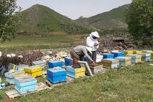 مریوان میزبان نخستین جشنواره منطقهای عسل است