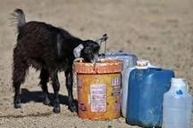 یک سوم آب شرب مناطق روستایی گنبد به مصارف دامی می رسد
