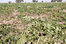 خسارت ۵۱۰ میلیارد تومانی حوادث طبیعی به کشاورزی استان