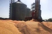 گندم و کلزای کشاورزان دزفول توسط 6 مرکز خرید تضمینی می شود