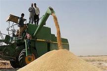 کشاورزان زنجانی با 500 هزار تن تولید گندم رکورد شکستند