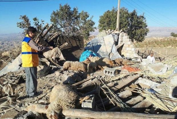 120 میلیارد ریال خسارت دام زلزله زدگان پرداخت شد