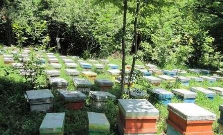 گالیکش یکی از مناطق مهم تولید عسل با کیفیت در گلستان است