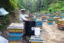 تولید 850 تن عسل و 310 تن گوشت قرمز در آستارا