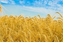 تولید محصولات کشاورزی استان اردبیل افزایش یافت