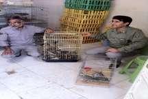 پنج قطعه پرنده و یک راس میش قاچاق درسیستان و بلوچستان کشف شد