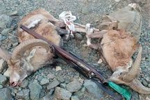 شکارچیان کل و بز وحشی در لرستان دستگیر شدند