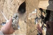 خسارت بیش از 400 میلیون ریالی صیادان پرندگان شکاری به طبیعت درگز
