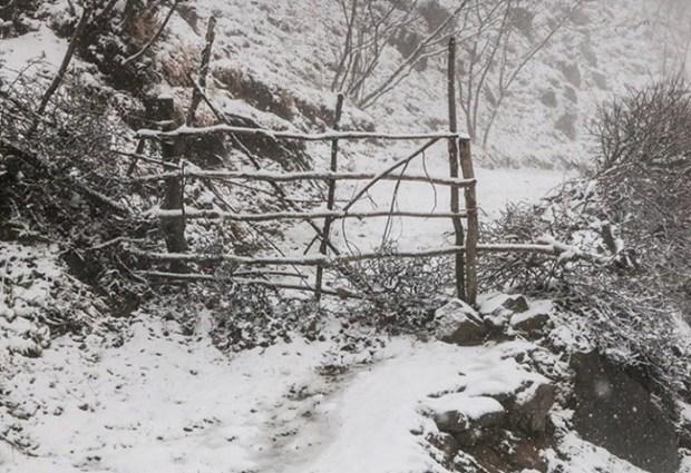 سرما در راه گلستان